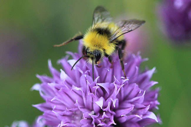 DDL bijen.jpg