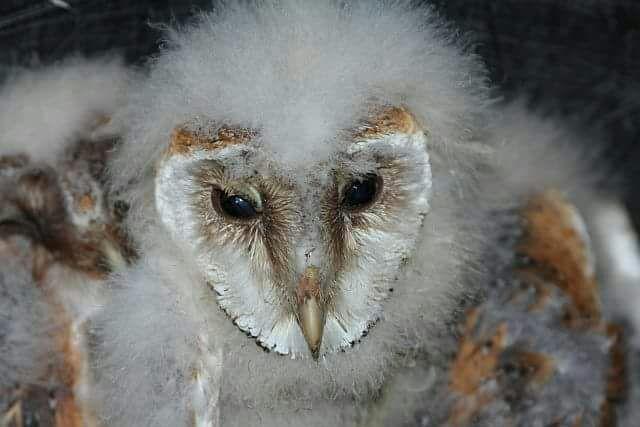 uilen jong 2017-06-03 at 12.01.13