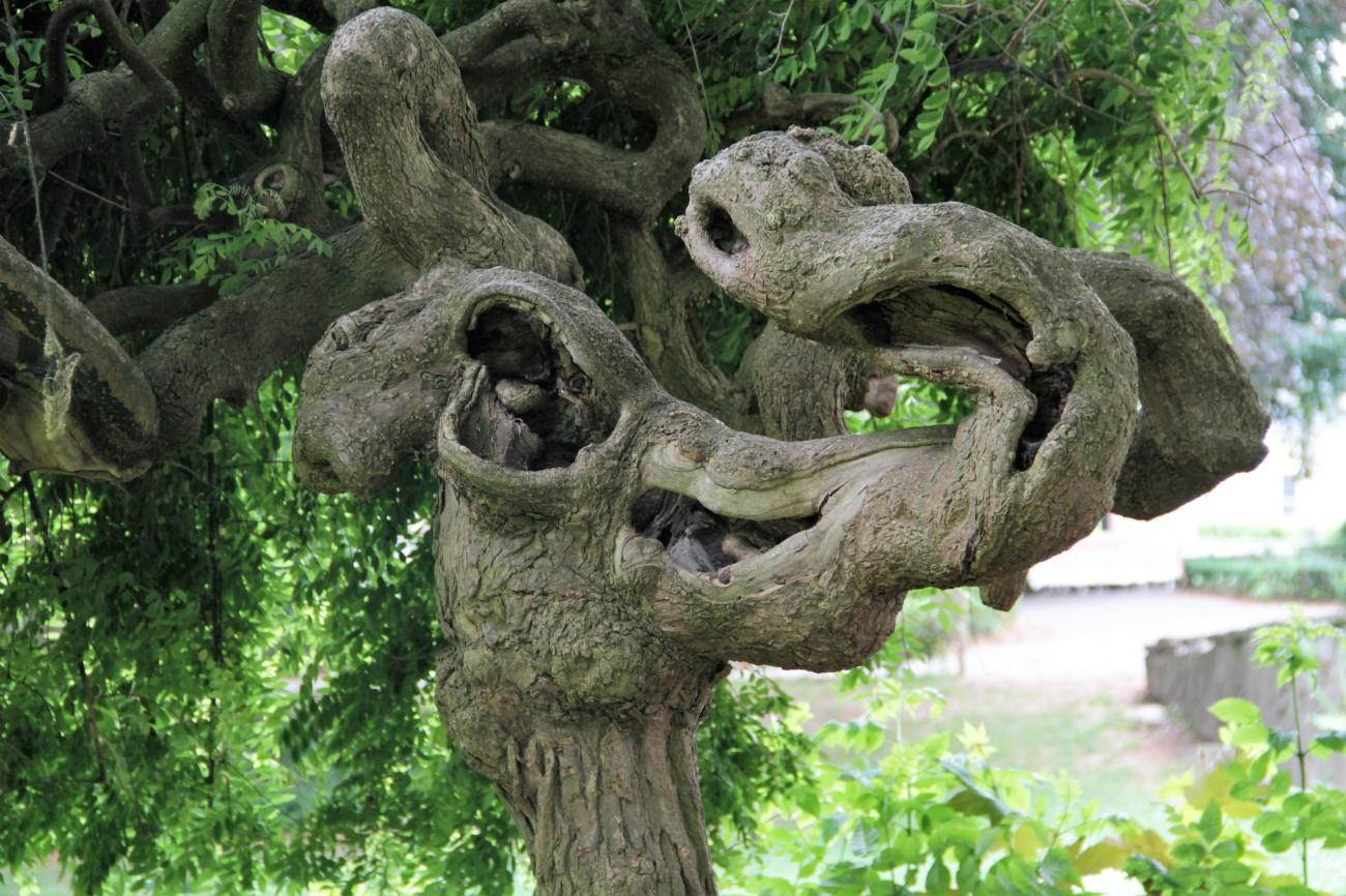 zottegem olifantenboom park kasteel lamoraal IMG_7056