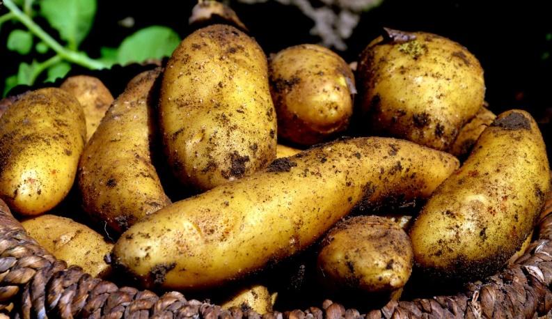 KDP zomeren 7 aardappelen