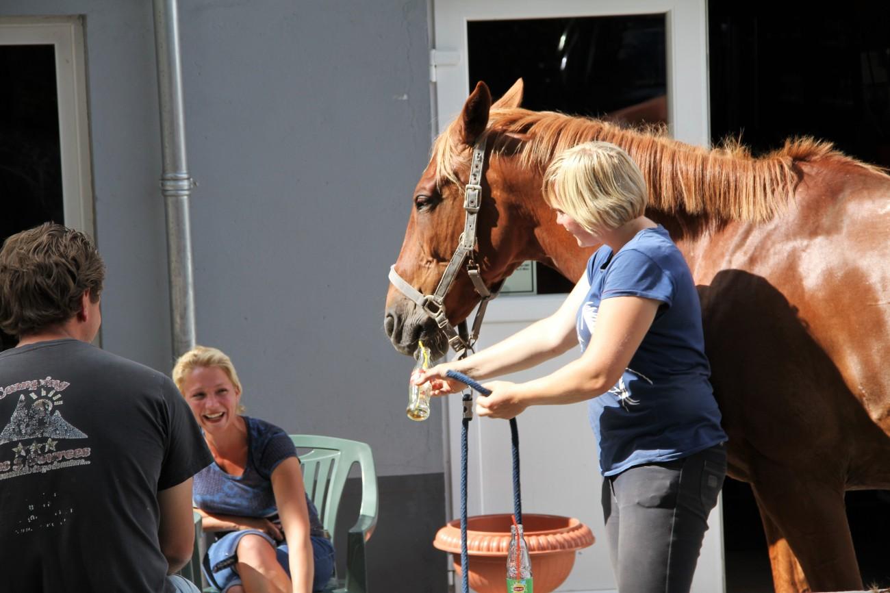 paard drinkt met amazone IMG_9062.jpg