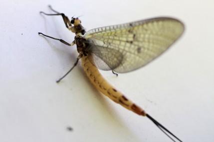 macrofoto insect IMG_9191