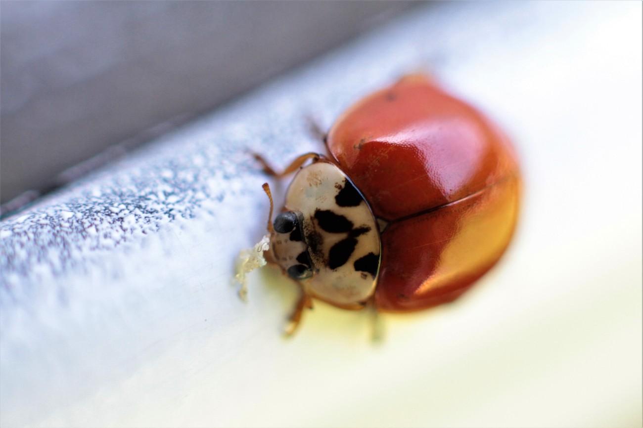 macrofoto insect IMG_9232