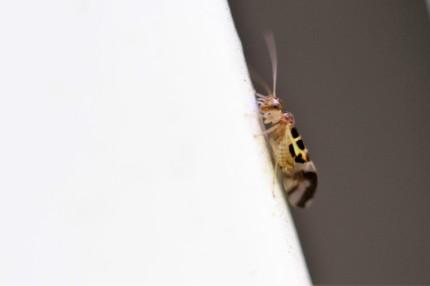 macrofoto insect IMG_9499